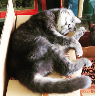15 Bookstore Cats You'll Want to Cuddle With